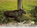 Kalender Wildpark Tambach